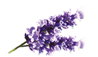 Air Wick Lavender Fragrances