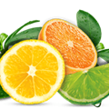 Citrus Fragrances